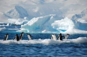 Antartica Through Art